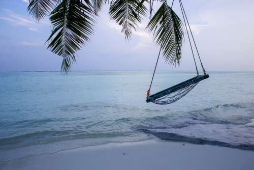 Swing Hanging From a Palm Tree on a Tropical Beach