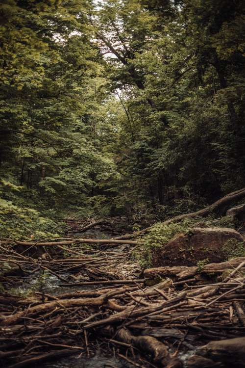 Fallen Trees Over River Photo