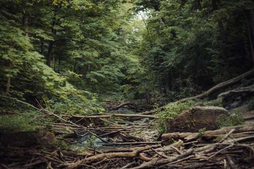 Natural Forest Collapse Photo