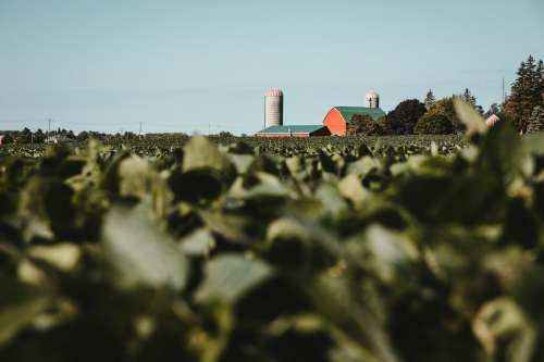 Red And Green Farm Behind Crop Field Photo