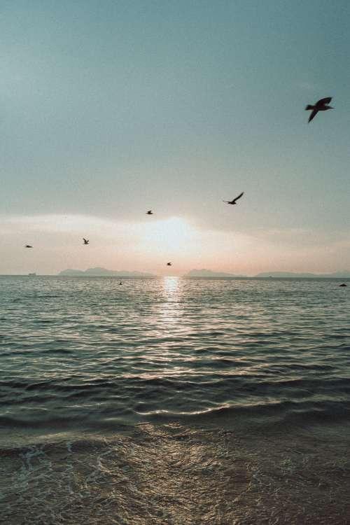 Birds Fly Across A Sea Landscape Photo