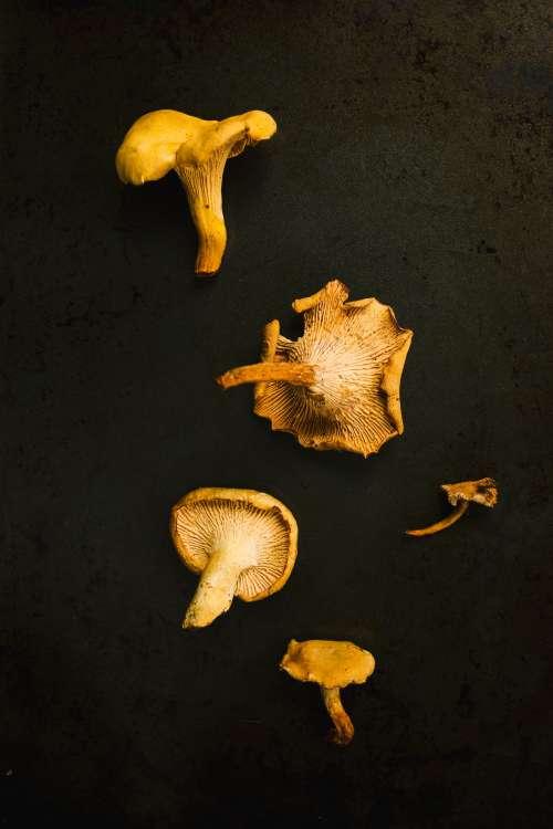 Yellow Mushrooms On Black Photo