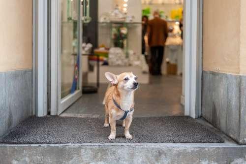 Small Dog Standing In Doorway Photo
