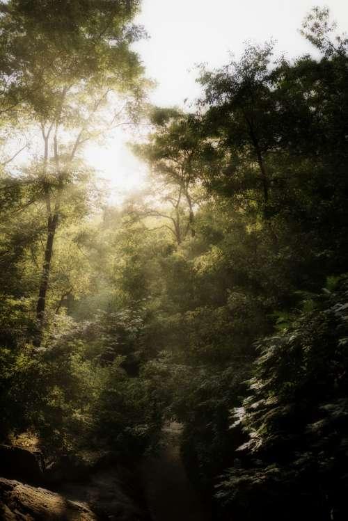 Mystical Park Photo