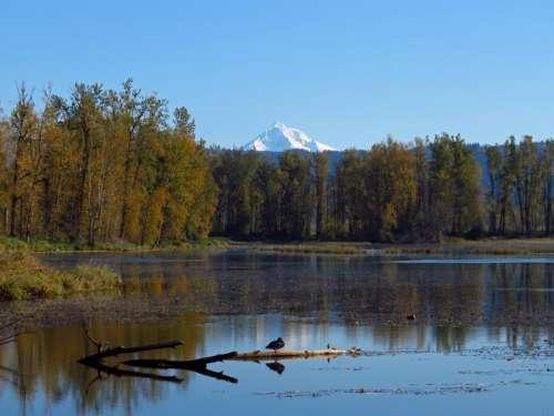 Lake bird and mountain
