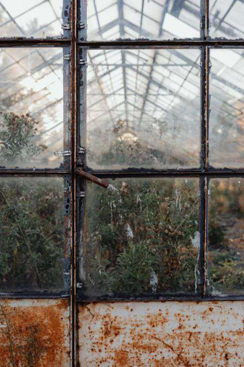 Dried plants in greenhouse