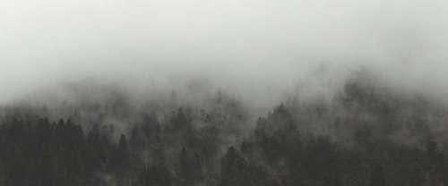 Fog Trees Nature Free Photo