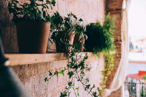 Potted Plants Shelf Free Photo