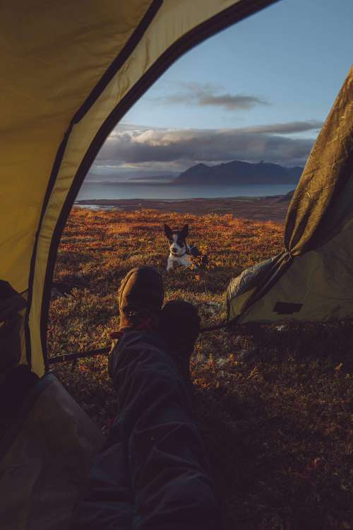 Amazing Camping Tent View with Husky Dog Free Photo