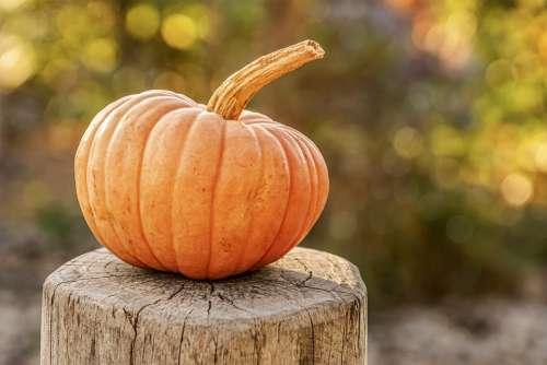 Pumpkin Autumn Decoration Orange Food