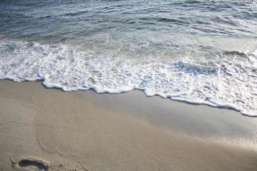 Seagull Ocean Waves Beach
