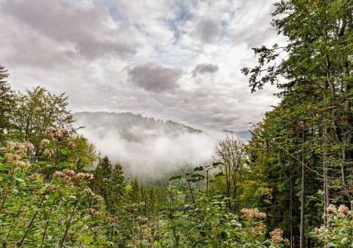 Nature Forest Trees The Fog Autumn Haze The Sky