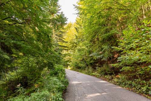 Nature Forest Path Trees Outdoors The Country