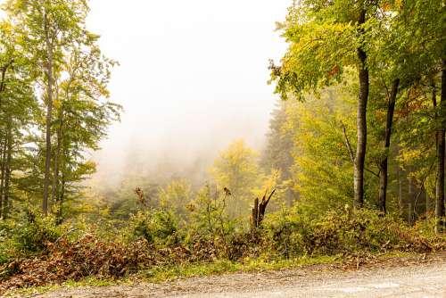 Nature Forest Path Autumn Tree Haze