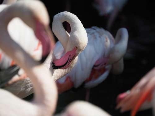 Bird Flamingo Whites Beak Eye Neck Animal