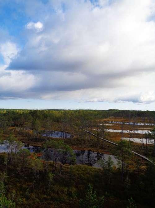 Estonia Viru Bog Nature Walk Walking Landscape