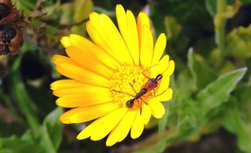 Garden Flower Insect Ant Colombia