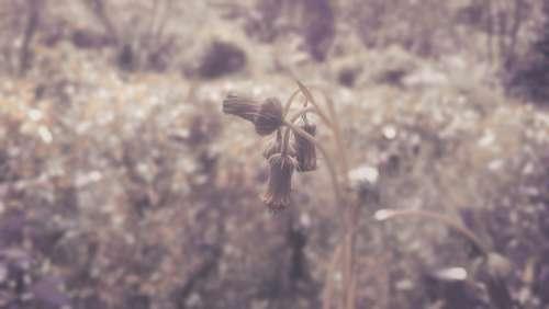 Wildflower Wild Nature Sri Lanka Thistle