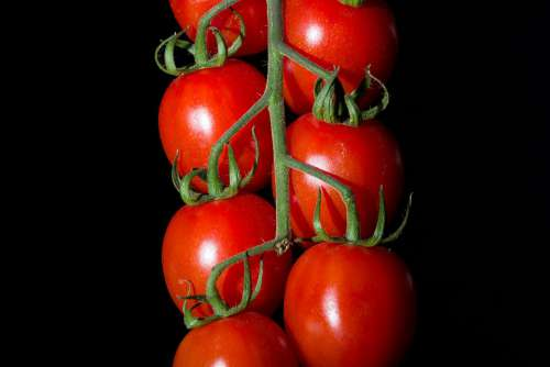 Cluster Tomatoes Cherry Branch Red Food Huerta