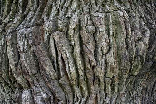 Structure Background Oak Tree Bark Wood Old Log