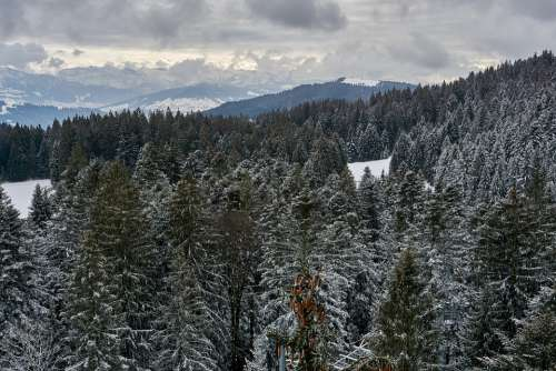 Winter Forest Trees Scenic Nature Snow