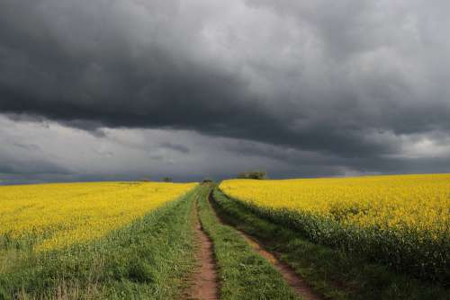 Spring Field Of Rapeseeds Clouds Weather