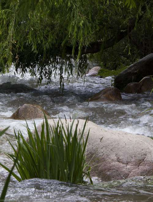 Stream River Mendoza Juncos Willow Summer
