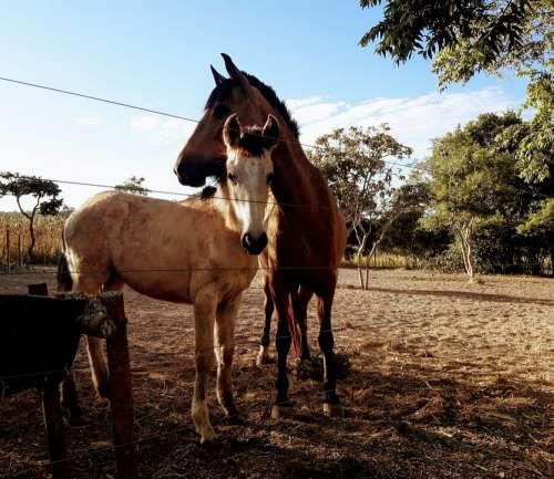 Horses Rural Equine Animals Pastures Nature