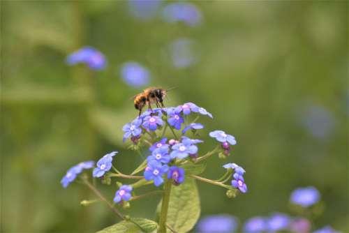 Bee Pollination Walk In The Park Hh Hamburgensien