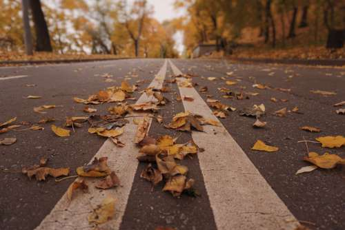 Road Autumn Leaves Yellow Foliage Moscow