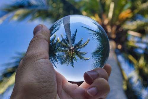 Palm Tree Paradise Palms Beach Island Tropical