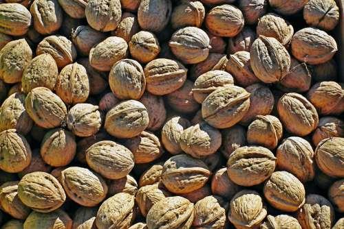 Nuts Italian Autumn Food Fruit Decorative Healthy