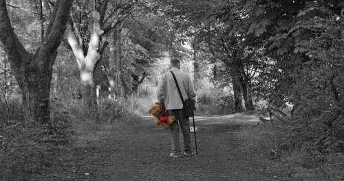 Teddy Bear Walking Stroll Cuddly Friends
