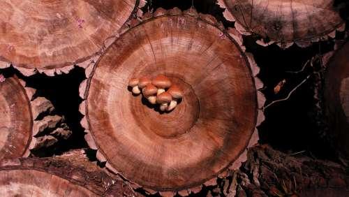 Mushroom Background Wood Tree Fungus Structure