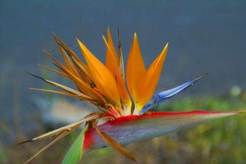 Flower Exotic Garden Flowers Flora Orange