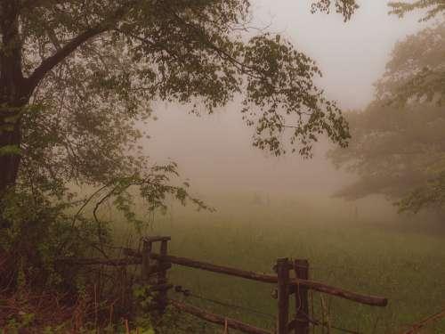 Fog Landscape Forest Nature Trees Scenic Haze