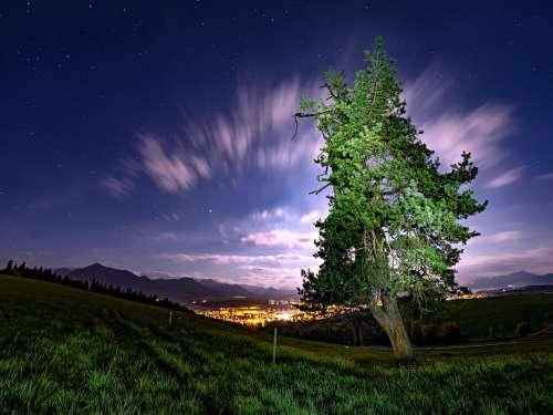 Sky Tree Outdoor Nature Moon Night Landscape