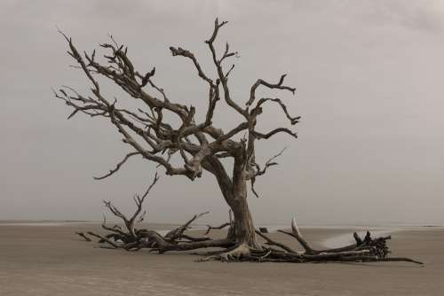 Tree Nature Landscape Water Outdoors Dry Sea