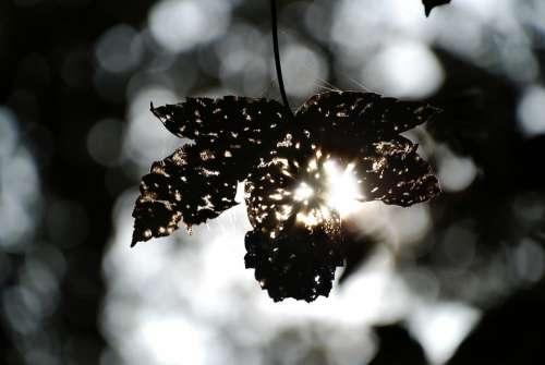 Autumn Leaves Leaf Sunbeam Nature Forest
