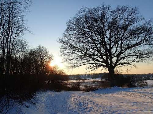 Tree Winter Snow Landscape Sunset