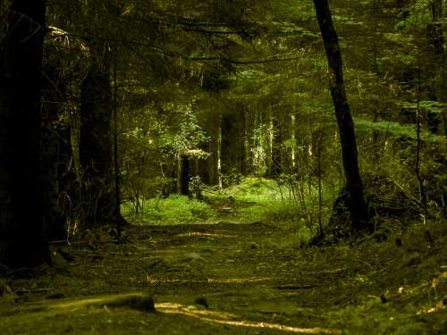 Black Forest Forest Nature Trees Mood Idyllic