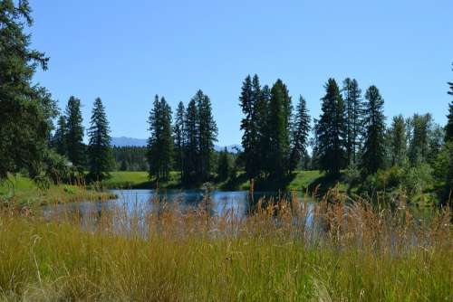 Pond Lake Water Trees Nature Grass Blue Sky