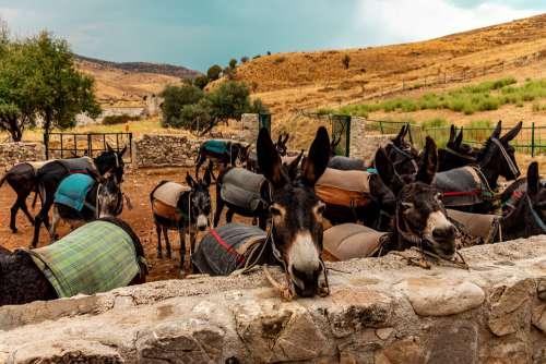 Kelokedara Cyprus Ass Animals Farm Holding Ears