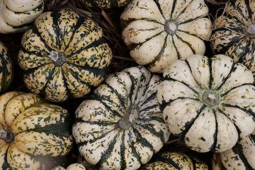 Pumpkin Autumn Fruits Choose Autumn Decoration