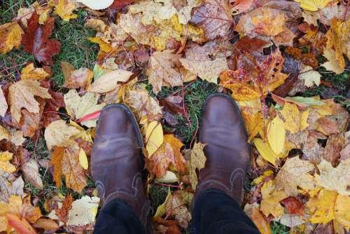 Outdoors Autumn Nature Overpass Wood