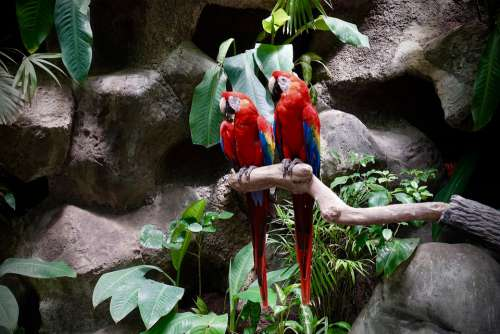 Colorful Plumage Bird Lori Parrot Exotic