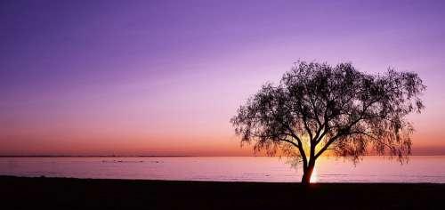 Sunset Water Black Tree Dream Sky