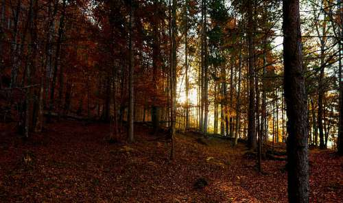 Nature Forest Landscape Trees Sunrise Autumn