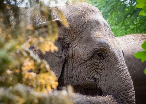 Elephant Animal Nature Mammal Safari Wild Zoo