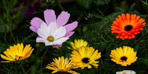 Flower Blossom Bloom Nature Plant Petals Summer